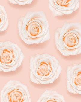 Modello dal fiore rosa bianco delle rose tenere fioriture naturali concetto minimo di vacanza