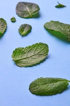 Modello di petali verdi di menta con goccioline d'acqua