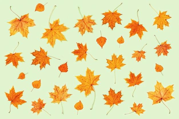 Modello fatto di foglie secche di autunno su verde chiaro