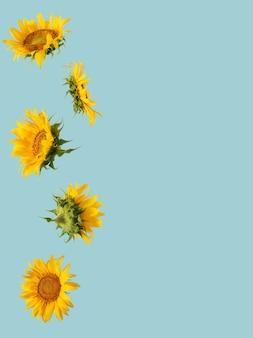 Modello realizzato con girasole giallo fresco con copia spazio sullo sfondo pastello blu. giardinaggio estivo giungla tropicale arte astratta