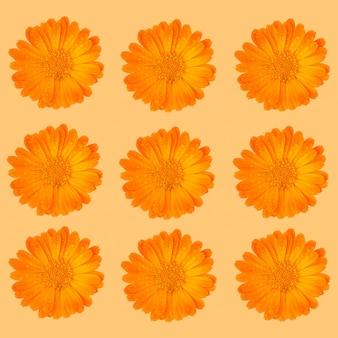 Modello di fiori di calendula erba medicinale arancione o calendula vaso con gocce d'acqua su una superficie arancione