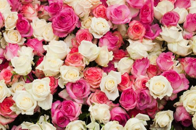 Sfondo di rose modello