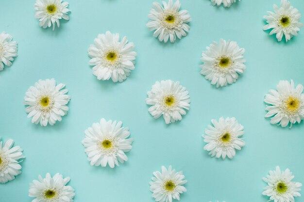 Modello di fiori margherita camomilla bianca sull'azzurro