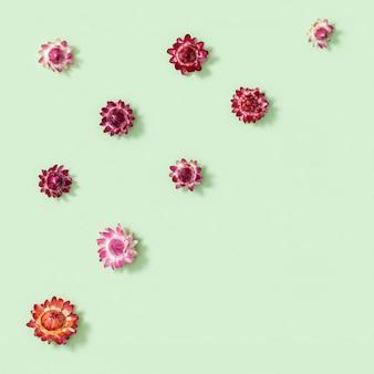 Modello con bocciolo in primo piano di fiori secchi decotrativi, piccoli fiori sul verde. sfondo naturale fiorito