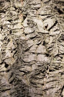 Texture di corteccia modellata