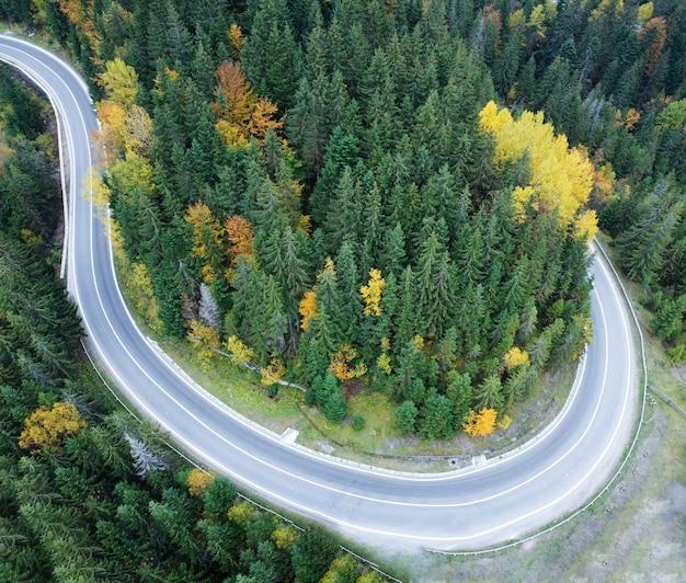 Strada asfaltata attraverso una fitta foresta nelle montagne dei carpazi, ucraina.
