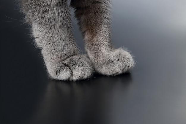 Primo piano del gatto grigio della zampa su oscurità