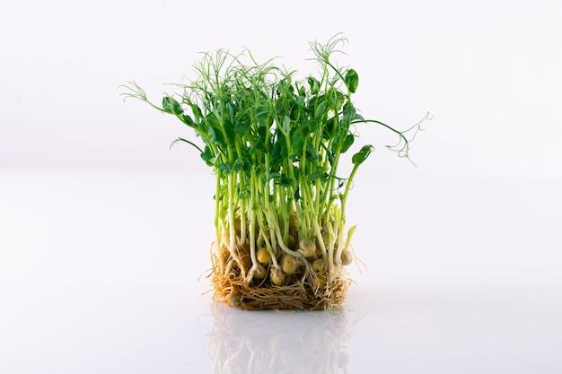 Germogli di pisello su una superficie bianca, micro verdi su un substrato in crescita