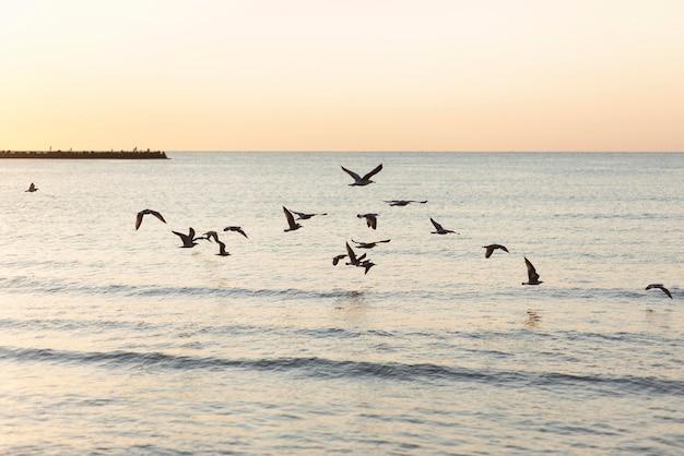Mare tranquillo e gruppo di uccelli
