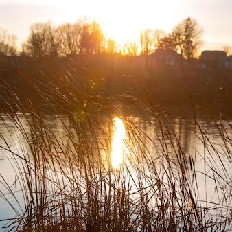 Vista tranquilla della luce dell'alba