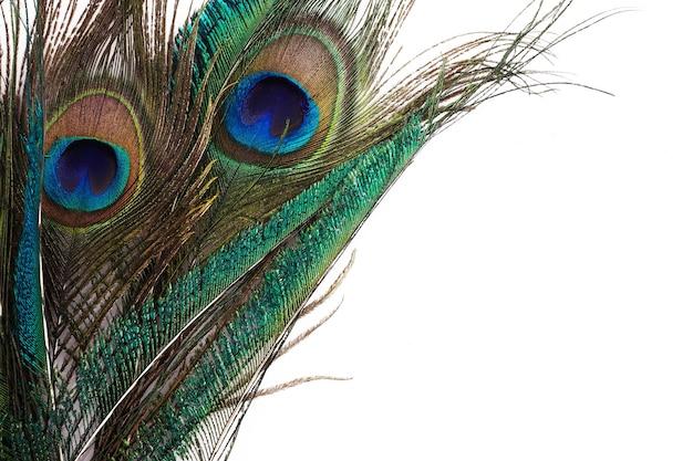 Piuma di pavone in stile regale su sfondo bianco. sfondo astratto tropicale. uccello esotico.