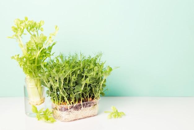Microgreens di piselli con semi e radici. germogliamento di micro-verdure su stuoie di coltivazione di iuta microgreens.