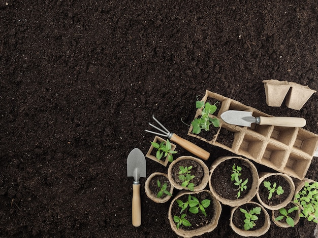 Piantine di torba e attrezzi da giardino sono a terra. vista dall'alto. copia spazio.