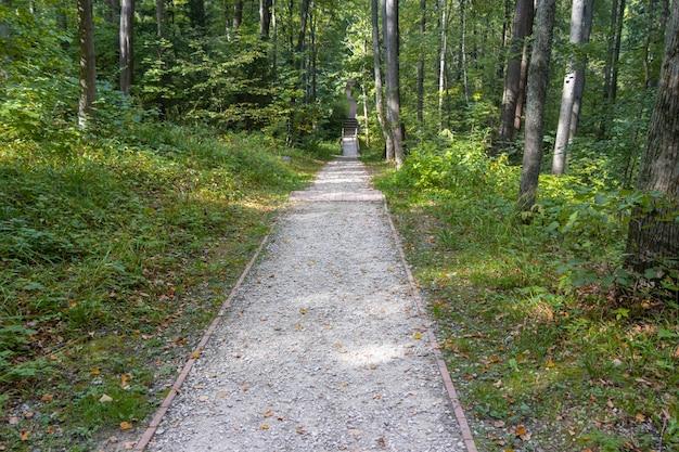 Strada pedonale in un parco di foresta verde decidua in una giornata estiva