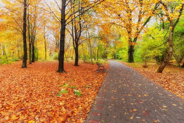Marciapiede pedonale, panchine e alberi in un parco cittadino in autunno.