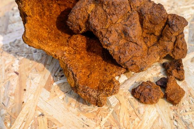 Fungo di chaga della betulla selvatica sbucciato su una superficie di legno
