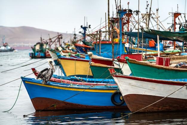 Pellicano su una barca di legno a paracas in perù