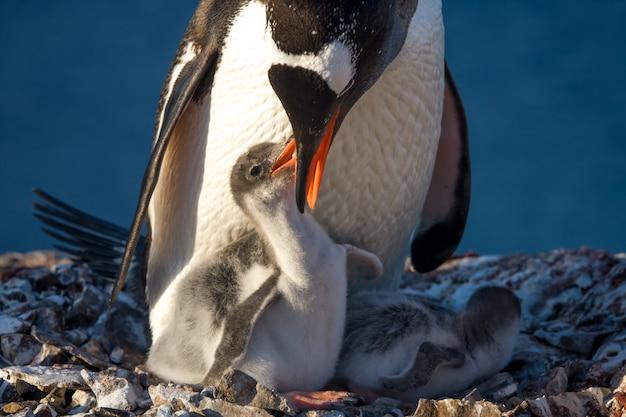 Famiglia di pinguini
