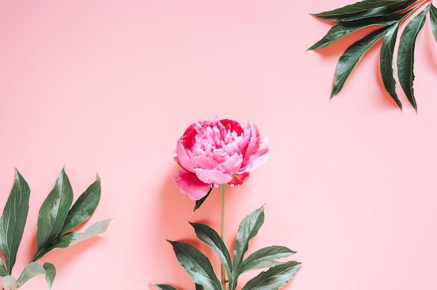 Il bouquet di peonie fiorisce su uno sfondo rosa vivace