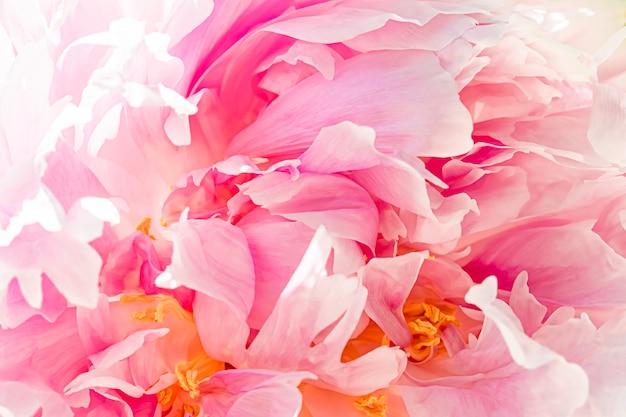 Fiore di peonia in un giardino di bellezza floreale e sfondo botanico per invito a nozze e biglietto di auguri concetto di natura e ambiente