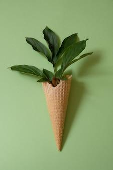 Foglia di peonia in un cono di cialda. concetto di estate. disposizione piatta. ombra alla moda