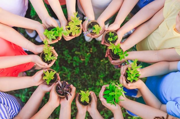 Le mani della gente che foggiano a coppa la pianta coltivano ambientale