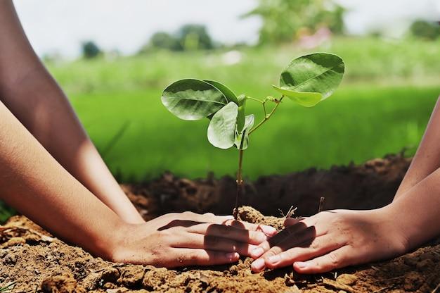 Persone che aiutano a piantare alberi