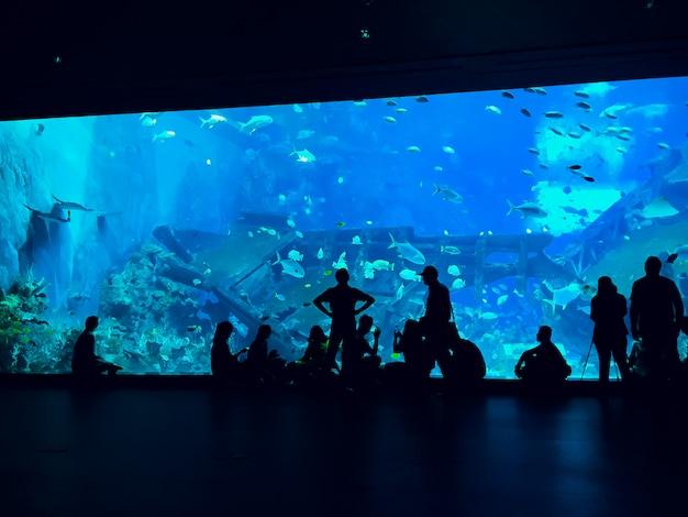 Le persone osservano i pesci all'acquario