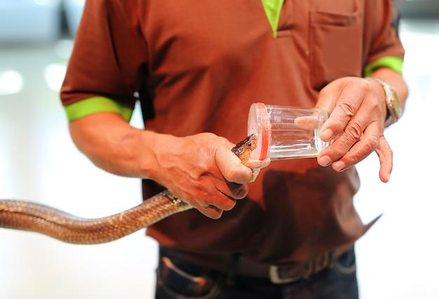 Le persone mostrano veleno di serpente