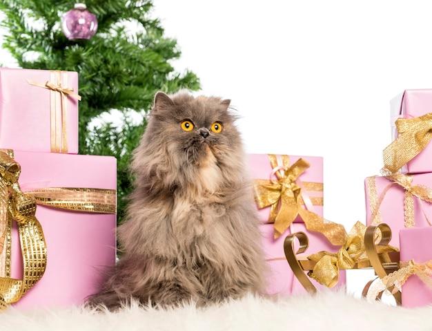 Persiano seduto di fronte a decorazioni natalizie