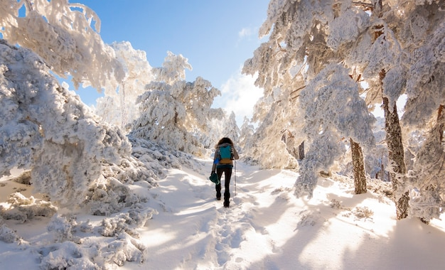 Persona che fa un'escursione nella foresta nevosa nella sierra de guadarrama national park, spagna