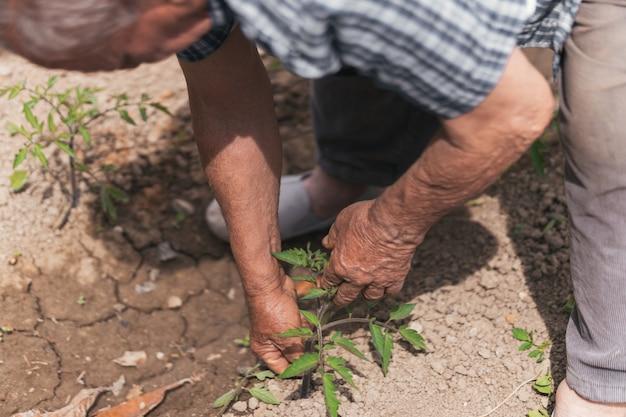 Persona che lavora senza sosta, sforzo dell'agricoltore durante la coltivazione.