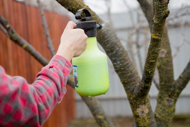 Trattamento antiparassitario, controllo dei parassiti, sterminio di insetti su alberi da frutto in giardino, spruzzando veleno da una bottiglia spray, mani in primo piano.