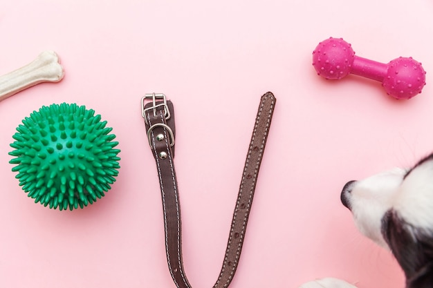 La cura degli animali e il concetto di animali. giocattoli e accessori per il naso del cane per giocare e allenarsi isolati su sfondo rosa