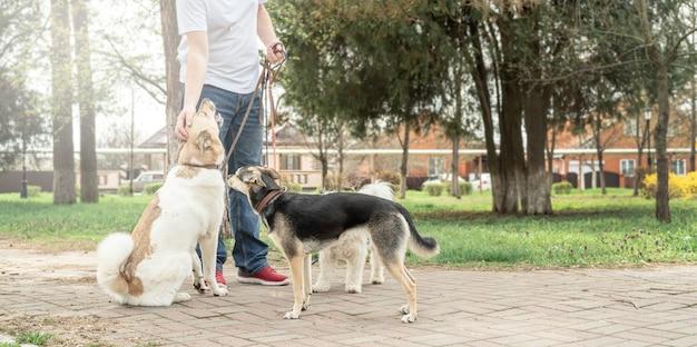 Cura degli animali. dog walker maschio professionista che cammina con un branco di cani sul sentiero del parco Foto Premium