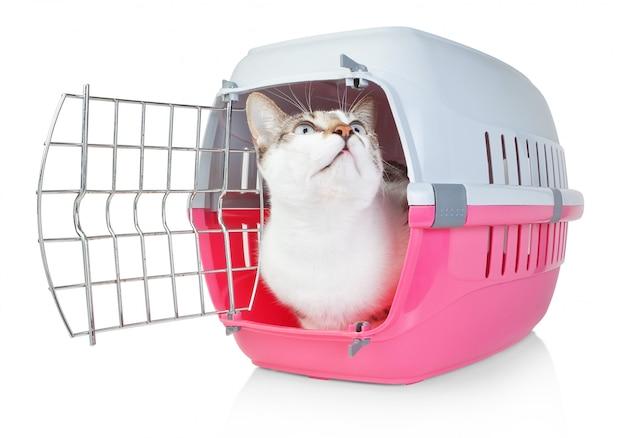 Gatto domestico in una gabbia per il trasporto con la porta aperta. lui alza lo sguardo.