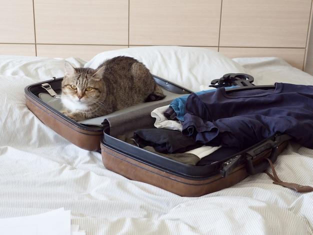 Gatto domestico pronto a viaggiare dormire in valigia con bagaglio sul letto