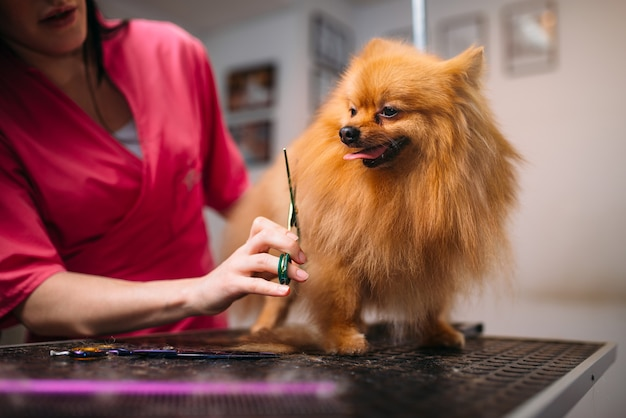 Il toelettatore per animali domestici rende il cane da toeletta