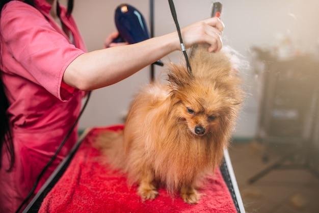 Toelettatore per animali domestici con asciugacapelli, cane nel salone di toelettatura