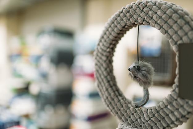 Pet shop, anello con topo in primo piano, accessori per gatti, nessuno. varietà di negozi di animali, nessun popolo