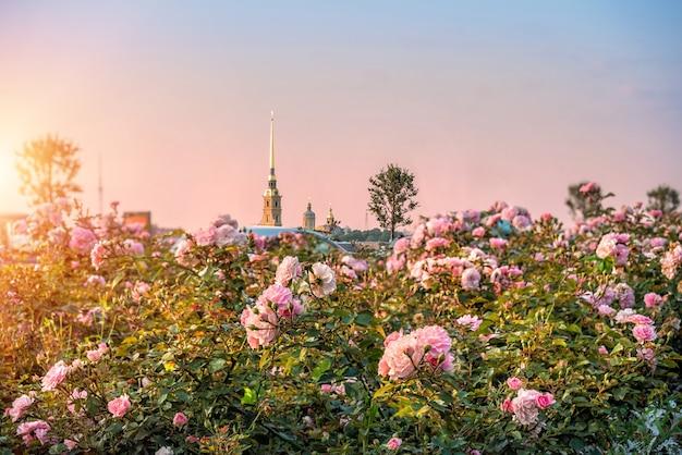 Fortezza di pietro e paolo a san pietroburgo al tramonto circondata da rose