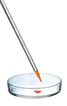 Capsula di petri isolata su bianco