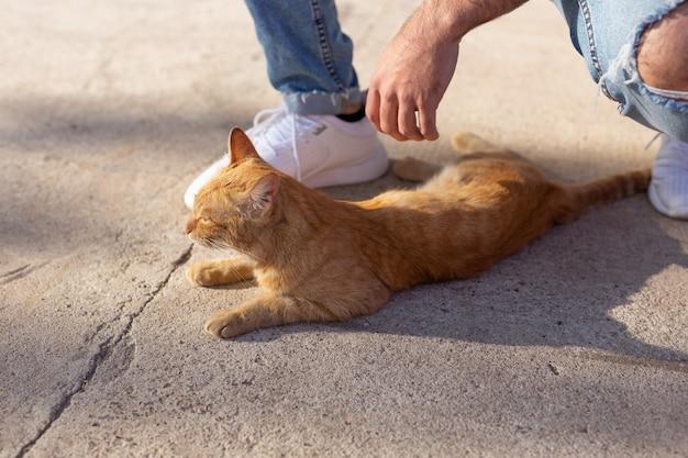 Concetto di animali domestici e animali - bel giovane uomo gioca con il simpatico gatto rosso all'aperto, primo piano