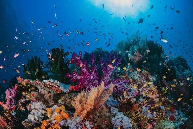 Foto di una colonia di coralli su una barriera corallina