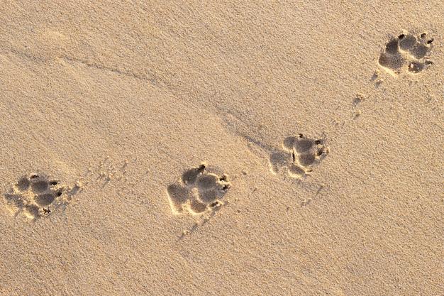 Foto di impronta di cane (animale) sulla spiaggia tropicale