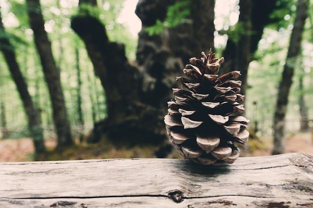 Foto di ananas essiccato e albero centenario in background