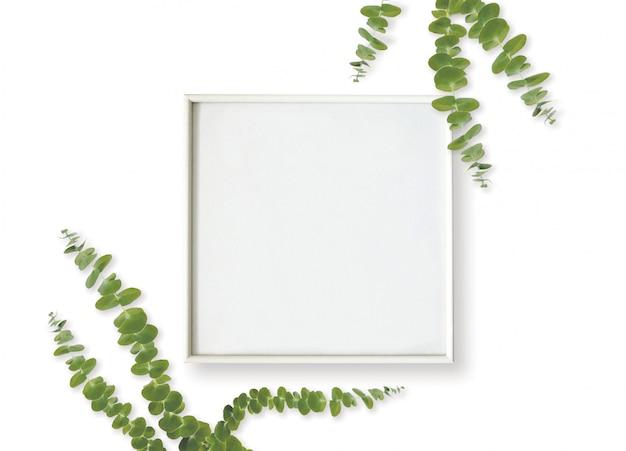 Foglie della struttura e dell'eucalyptus della foto su fondo bianco