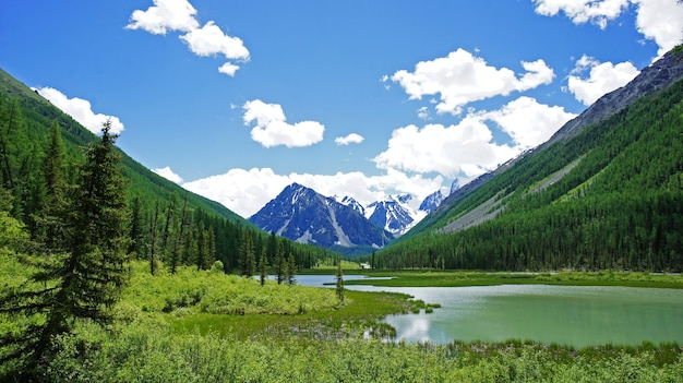 Foto delle montagne in altai. fiumi, valli, alberi, nuvole