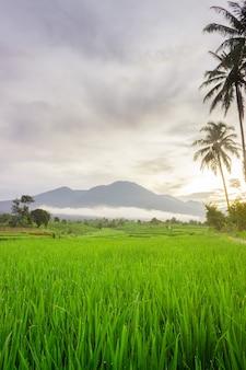 Foto di uno scenario naturale di campi di riso e montagne blu sfocate e nuvole di nebbia in una mattina limpida a bengkulu utara, indonesia