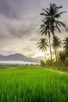 Foto di uno scenario naturale di campi di riso e montagne blu sfocate e nuvole di nebbia mattutina a bengkulu utara, indonesia